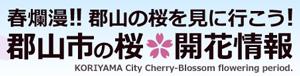 郡山の桜 開花情報
